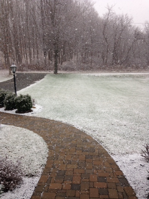 I took this photo when the snow had just started to fall. We got anywhere from 8-12 inches by Thursday morning.
